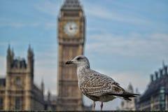 Um pássaro antes de Big Ben Imagens de Stock Royalty Free