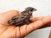 Um pássaro de bebê fotos de stock