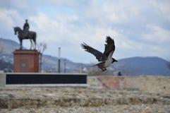Um pássaro de voo Fotografia de Stock