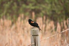 Um pássaro em um cargo da cerca fotografia de stock royalty free