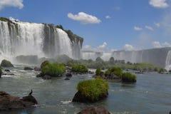 Um pássaro em quedas de Iguassu Imagens de Stock Royalty Free