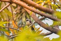 Um pássaro em uma árvore Fotografia de Stock Royalty Free