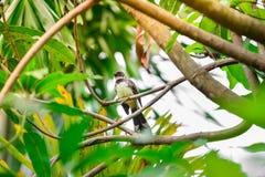 Um pássaro em uma árvore Fotos de Stock Royalty Free