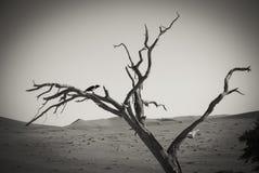 Um pássaro em uma árvore no deserto de Namib Foto de Stock Royalty Free