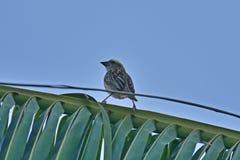 Um pássaro minúsculo fotografia de stock