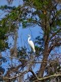 Um pássaro nas árvores perto de Hilton Head, SC foto de stock