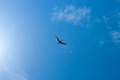 Um pássaro no céu Imagens de Stock Royalty Free