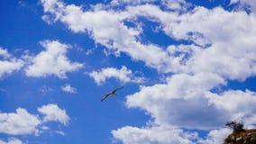 Um pássaro no céu Fotografia de Stock Royalty Free