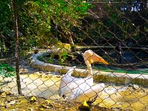 Um pássaro no jardim foto de stock royalty free