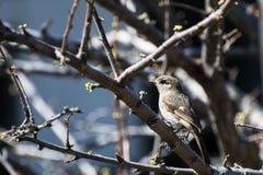 Um pássaro pequeno Fotos de Stock
