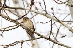 Um pássaro pequeno Foto de Stock Royalty Free