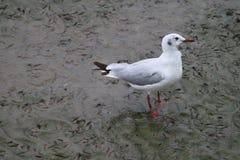 Um pássaro pequeno Fotografia de Stock