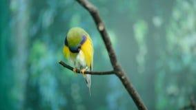 Um pássaro pequeno bonito vídeos de arquivo