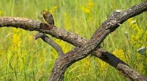 Um pássaro pequeno está no ramo Imagem de Stock