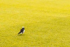 Um pássaro pequeno no campo amarelo foto de stock