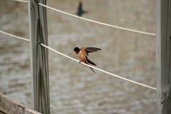 Um pássaro pronto à decolagem foto de stock