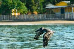 Um pássaro que voa sobre a água imagens de stock royalty free