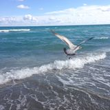 Um pássaro que voa sobre o mar Fotos de Stock