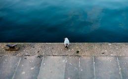 Um pássaro só que senta-se pela parte dianteira da água fotografia de stock