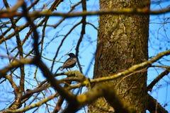 Um pássaro senta-se em um ramo de árvore imagens de stock