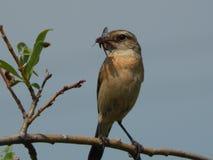 Um pássaro um pardal no selvagem Imagem de Stock Royalty Free