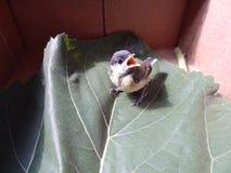 Um pássaro um pardal no selvagem Fotografia de Stock