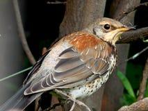 Um pássaro um pardal no selvagem Imagem de Stock