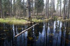 Um pântano pequeno fotografia de stock