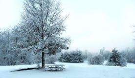 Um país das maravilhas do inverno Imagens de Stock