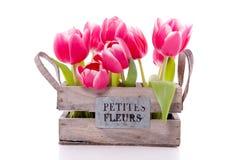 Um pacote de tulips cor-de-rosa Imagens de Stock Royalty Free