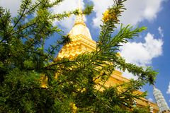 Um pagode atrás da árvore Foto de Stock Royalty Free