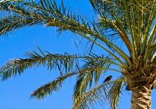 Um palmtree e um pássaro. Imagem de Stock Royalty Free