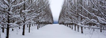 Um panorama das fileiras das árvores. imagens de stock royalty free