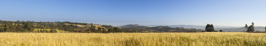 um panorama de 180 graus de Etiópia Fotografia de Stock Royalty Free