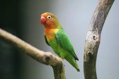 Um papagaio foto de stock royalty free