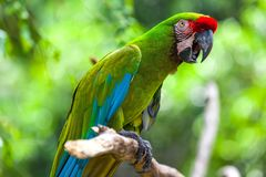Um papagaio bonito no jardim zoológico tropical de Ubud, Bali, Indonésia imagem de stock