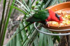 Um papagaio no jardim zoológico no parque de Loro, Puerto de la Cruz, Tenerife, imagens de stock royalty free