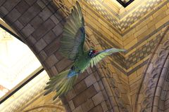 Um papagaio verde grande dentro da construção imagem de stock