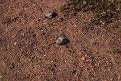 Um par belamente detalhado de pedras na areia fotografia de stock
