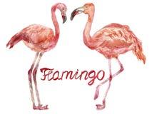Um par de flamingos cor-de-rosa da aquarela que enfrentam-se ilustração stock