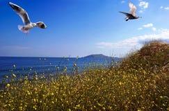 Um par de gaivotas foto de stock