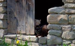 Um par de gatos Fotos de Stock Royalty Free