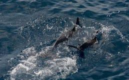 Um par de golfinhos fotos de stock