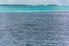 Um par de golfinhos imagens de stock