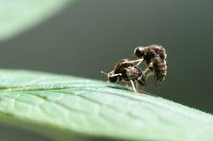Um par de insetos Fotografia de Stock Royalty Free