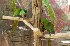 Um par de papagaios verdes Foto de Stock