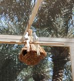 Um par de pombos Fotos de Stock