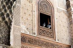 Um par de pombos em Bou Inania Madarsa em Fes, Marrocos Imagem de Stock Royalty Free