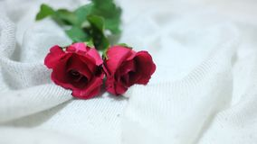 Um par de rosa vermelha no bedsheet enrugado branco no quarto fotografia de stock royalty free