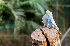Um par pássaro imagens de stock
